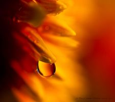 A Drop of Autumn by Linda-L