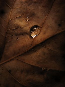 .autumn.II. by witchlady750