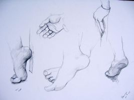 study of hands and feet by stanuga