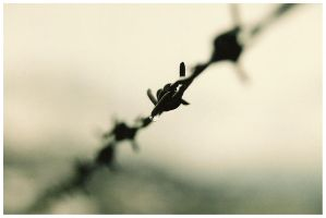 Barbed wire by joffo1