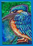 ACEO- Kingfisher by Septimosis