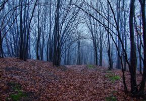 Scary forest . by dammitt
