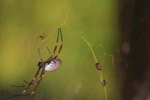 Spider 2581 by craigp-photography