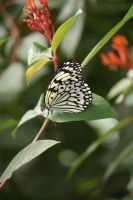 view to butterfly 8 by ingeline-art