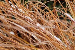 snow in the reeds by Minicorndogs