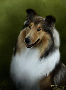 Collie by Tipetsu