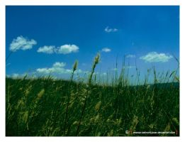 peace field by Valmont-jose