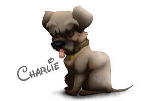Dogs from Work~ Charlie the Border Terrier by EyesInTheDark666