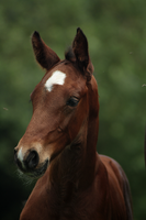Foal stock 89 by Bundy-Stock