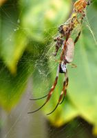The Yard Spider by Moaheya