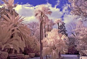 INFRARED by agelisgeo