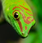 Day Gecko says hello by nakkimo