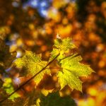 Autumn bokeh by realityDream
