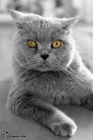 yellow eyes by dragona666