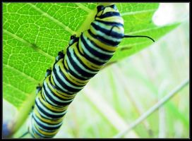 Caterpillar II by caitlinwithasea