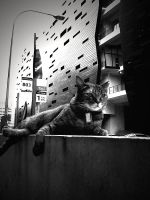 aristocat. by purposelydifficult
