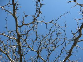 Thorny Branches Stock II by Foxytocin