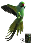 Cut-out stock PNG 129 - flying parrot by Momotte2stocks