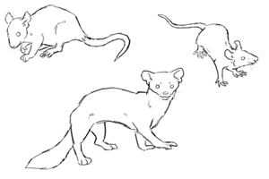 Small Mammals Lineart by Pred-Adopts