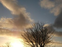 tree and sky by lexy-stock