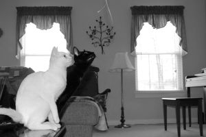 two cats in black and white by bobbyfufu