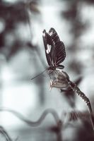 fluterBI by ambientgray