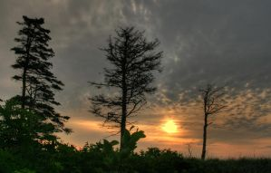 Trees at Aspy Bay Nova Scotia by EvaMcDermott