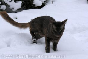 Jayto in the snow by BlackMysticA