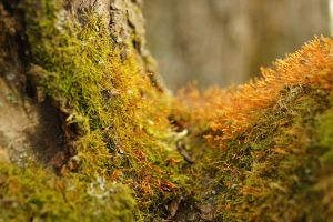 moss 2 by ravcia