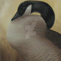 Canada Goose Study by Misted-Dream