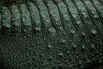 Alligator Skin by BonsEYE