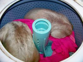 Two anteaters in a washer by TamanduaGirl