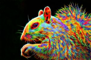 Colorful Squirrel by megaossa