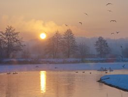 Winter birds by starykocur