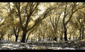Cork Trees by DPasschier