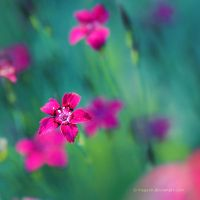 summer memories by Megson