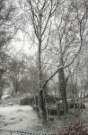 Snow in the Trees by tartanink