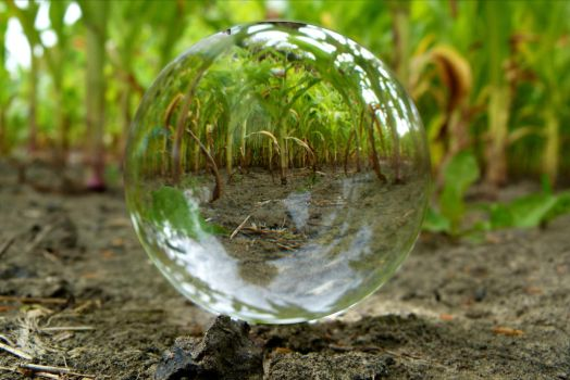 Crystal ball in corn field by April-Mo