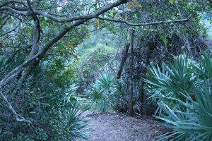 Florida Greenery 1 by elf-fu-stock