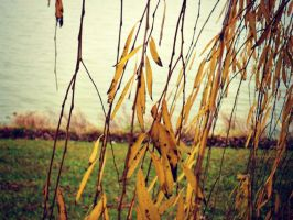 Willow 3 by purdyphotos