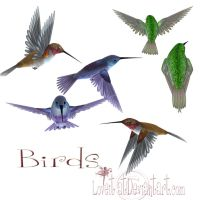 Birds by loveit by TW3DSTOCK