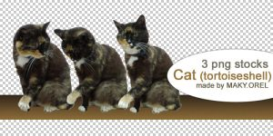 PNG STOCK SET: Tortoiseshell cat by MAKY-OREL