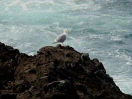 Gull by Stoked-Stock