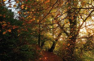 Belvoir Forest Path, Autumn 4 by Gerard1972