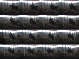 Horse Stock4- Jumping Frames by Akatsuki-girl-photos