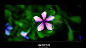flower by SAM-BOY