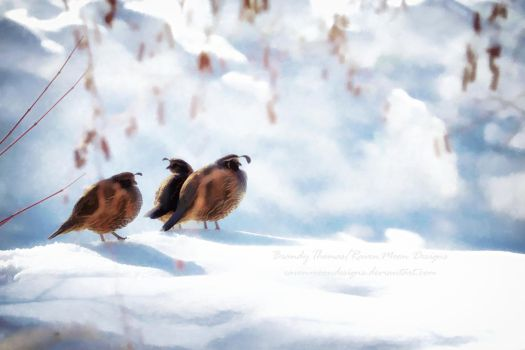 Tranquil Quail by RavenMoonDesigns