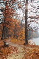 Autumn path by mary-petroff
