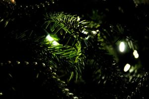 A light in the tree by Ellie-S