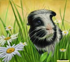 commission - Dalmation Guinea pig by Leia1987
